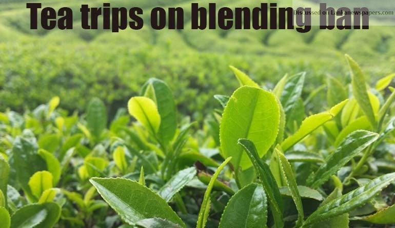 Sri Lanka News for Tea trips on blending ban