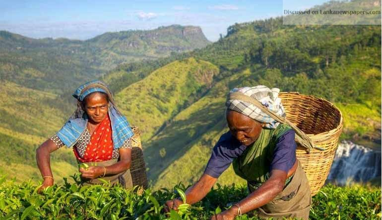 Sri Lanka News for Sri Lankan tea farmers want glyphosate herbicide ban overturned