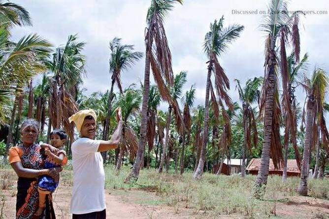 Sri Lanka News for No joy from rains for coconut growers, suffering farmers in five districts