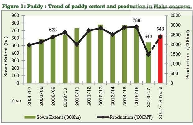 Sri Lanka News for Paddy output set to recover this Maha season