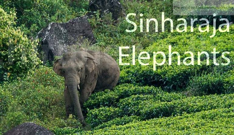 Sri Lanka News for Subject minister bullish on relocation of Sinharaja elephants
