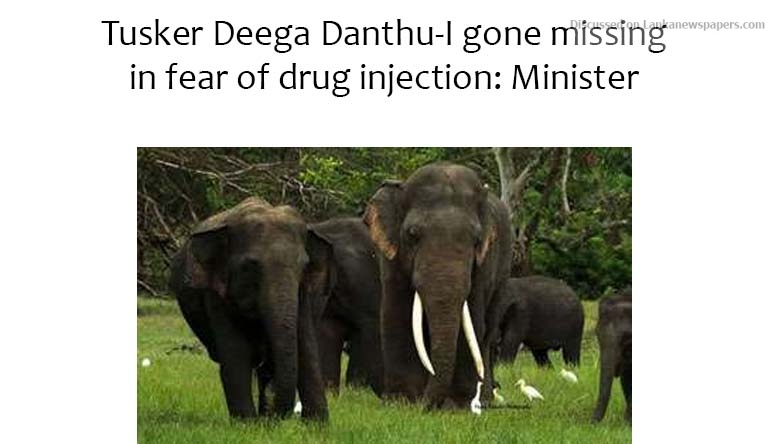 Sri Lanka News for Tusker Deega Danthu-I gone missing in fear of drug injection: Minister