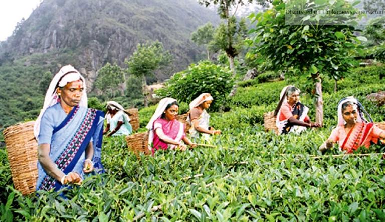tea in sri lankan news