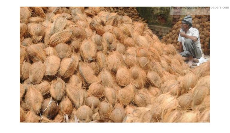 Sri Lanka News for Sri Lanka's coconut prices steady, export ban lifted