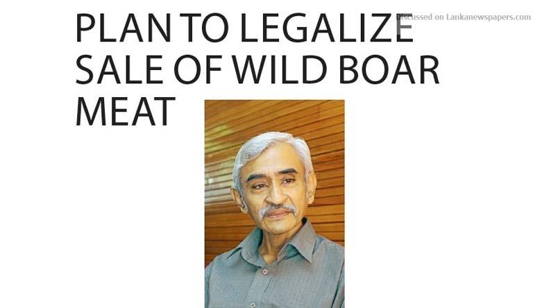 wild in sri lankan news