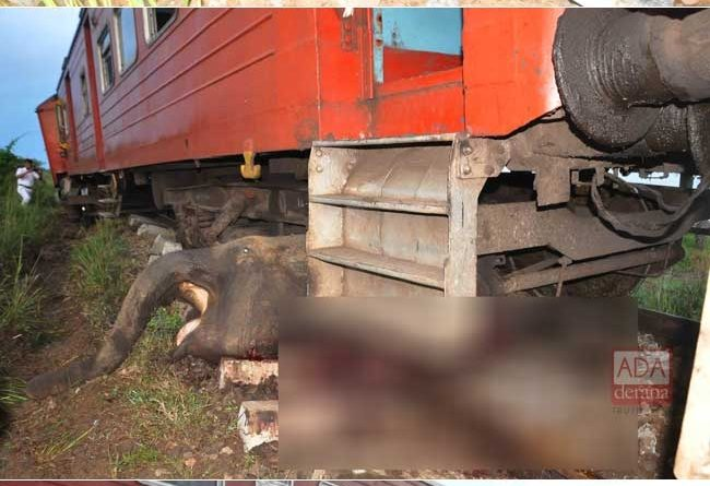 1538886752 Three more elephants killed in collision with train B in sri lankan news