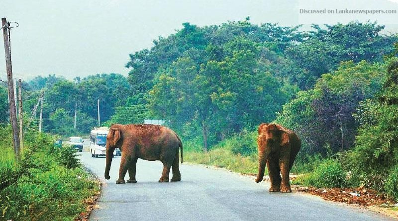 Sri Lanka News for Human Elephant Conflict Management – Learning from past mistakes