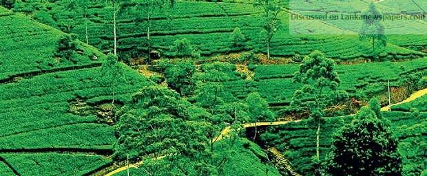 image 1543849219 a188d1dd38 in sri lankan news