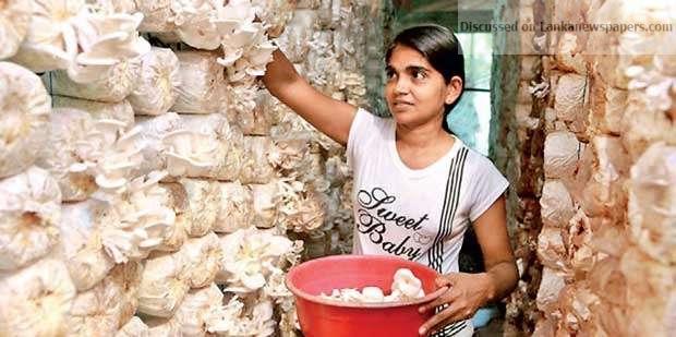 Sri Lanka News for Low skill trap and skill shortage