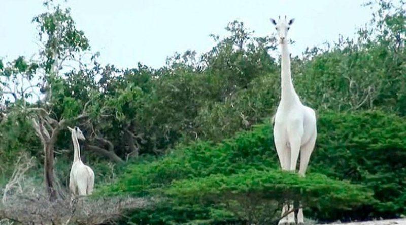 image 8684491440 in sri lankan news