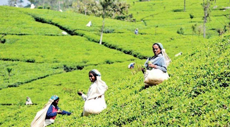 image 5726bbea4b in sri lankan news