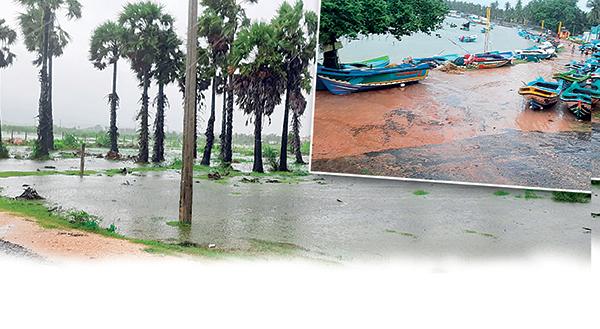 buravi in sri lankan news
