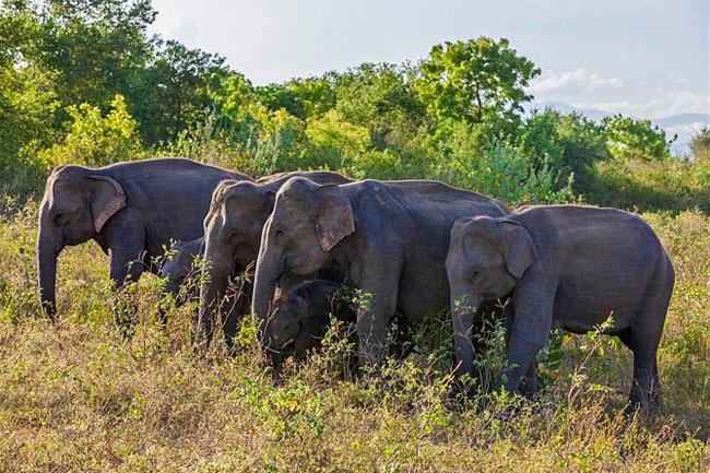 1618228954 Gazette issued establishing Hambantota Managed Elephant Reserve B in sri lankan news