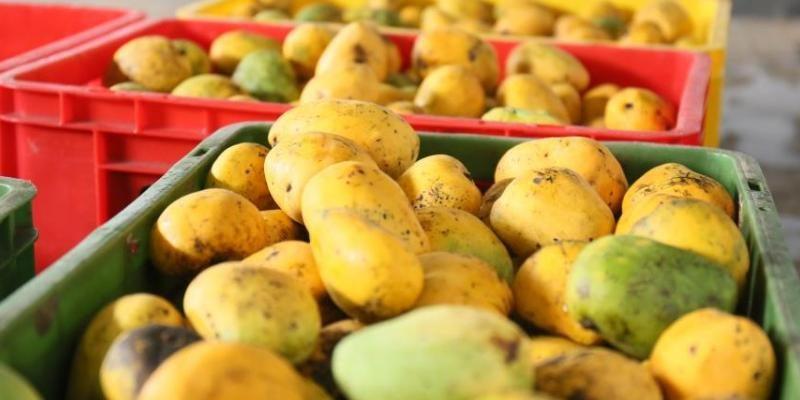 Mangoes SriLanka in sri lankan news