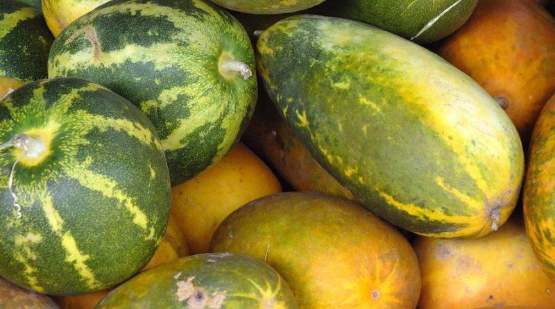 cucumber at sri lanka thilina alahakoon in sri lankan news