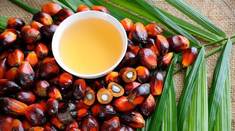 palm oil in sri lankan news