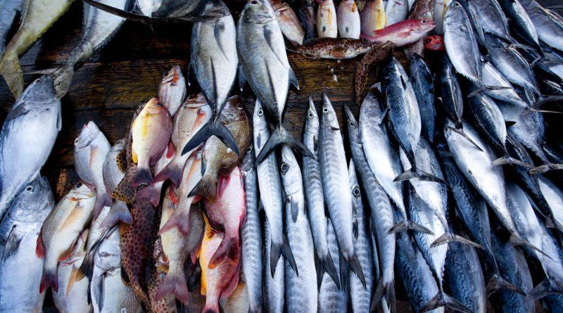fish market galle sri lanka in sri lankan news