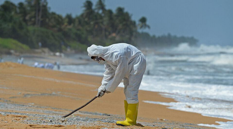 Hundreds of dead fish and turtles on the dream beaches in sri lankan news